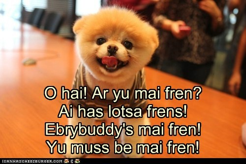 cute dogs friend friendly friends pomeranian - 6097123584