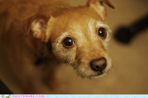 beg dogs eyes face pet reader squees Sad - 6097239040