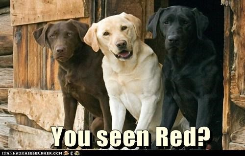 colors,dogs,labrador