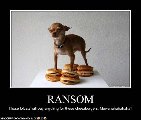 Cheezburger Image 6097438720