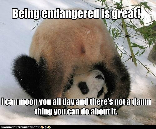 Being endangered is great! I can moon you all day and there's not a damn thing you can do about it.