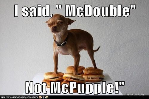 Cheezburger Image 6098453248