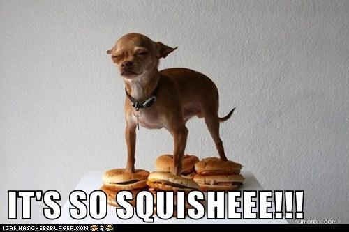 Cheezburger Image 6098636288