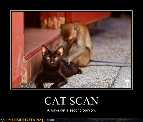 animals,cat,cat scan,hilarious,monkey