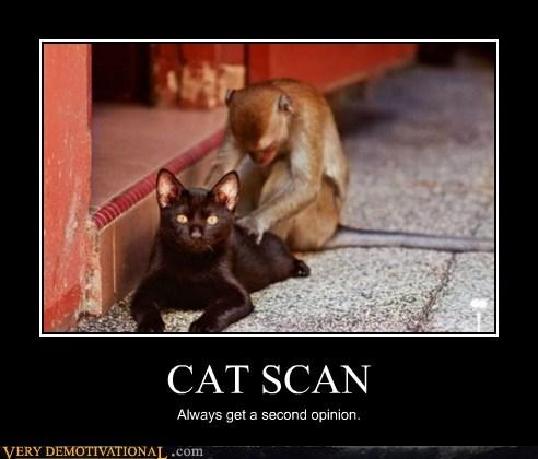 animals cat cat scan hilarious monkey - 6098735360