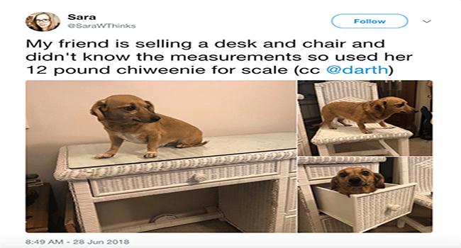 dogs twitter wtf random cute lol tweets funny weird - 6098949