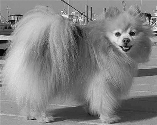 dogs titanic - 6098982400