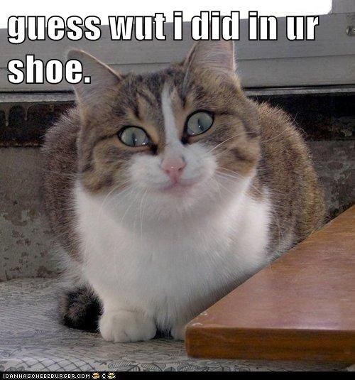 best of the week,cat,Cats,crazy,guess what,Hall of Fame,insane,lolcat,mischief,naughty,pee,poop,shoe,smiling