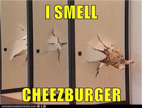 cat cheezburger destroy food hungry lolcat nom rip run walls - 6099199488