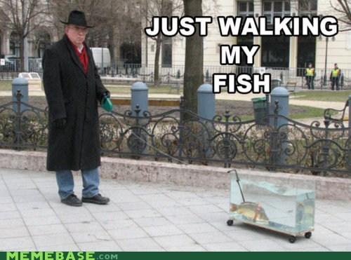 brits fish Memes walking - 6099216640