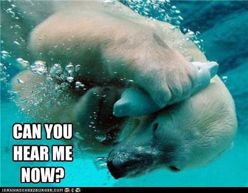 annoying,can you hear me now,cell phone,commercials,polar bear,talking,underwater