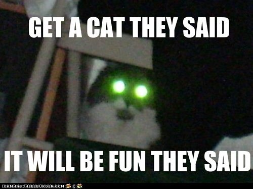 cat danger destroy devil evil fun lolcat not fun They Said