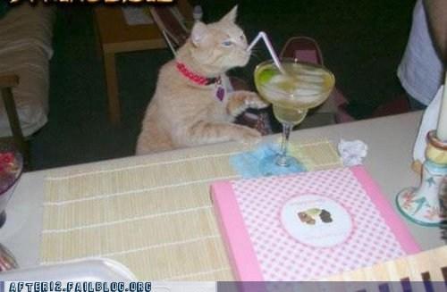 catnip,crunk critters,margarita,tequila