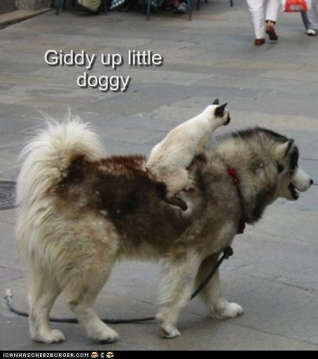 Giddy up little doggy