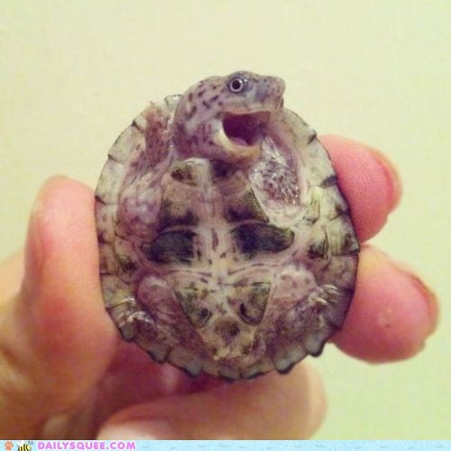 attitude,best of the week,expressions,fingers,hands,sassy,squee,tiny,turtle,turtles