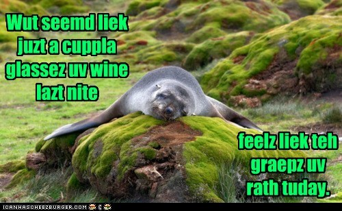hangover headache sea lion sleeping wine - 6100155648