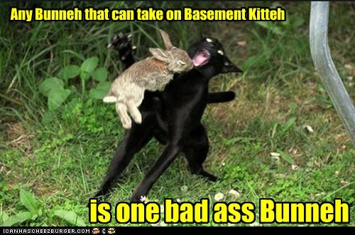 Any Bunneh that can take on Basement Kitteh is one bad ass Bunneh