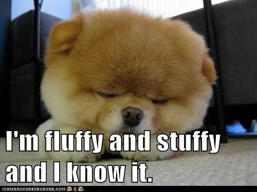 I'm fluffy and stuffy and I know it.