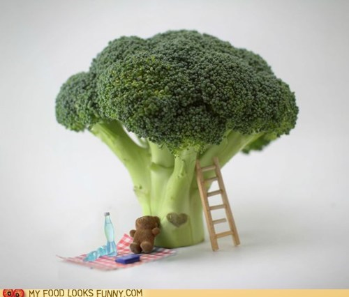broccoli,cute,ladder,picnic,teddy bear,tree