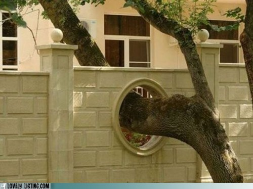 accommodate,clever,fence,hole,tree,wall