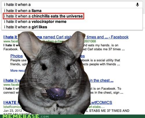2012 apocalypse chinchilla Memes universe - 6100446720