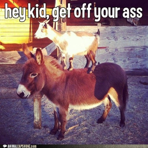 ass best of the week donkey get off goat Hall of Fame kid kids these days puns - 6100764672