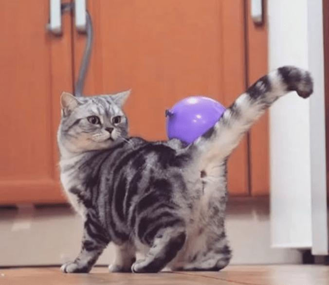 funny cat videos cute videos videos instagram kitten cute funny cats kitten videos cat videos Cats funny - 6100997