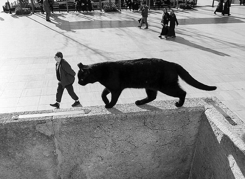 strange and cool animal perspective photos, giant cat walking behind person