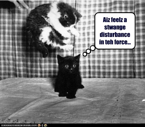ambush,attack,force,kitten,lolcat,sci fi,star wars