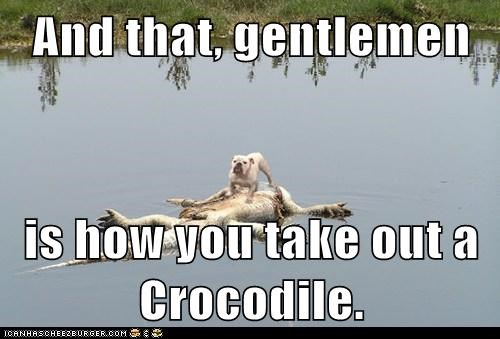 crocodile,demonstration,dogs,gentlemen,kill,take out