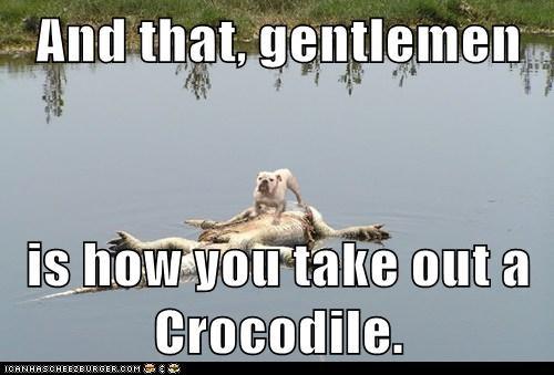 crocodile demonstration gentlemen kill - 6102475520