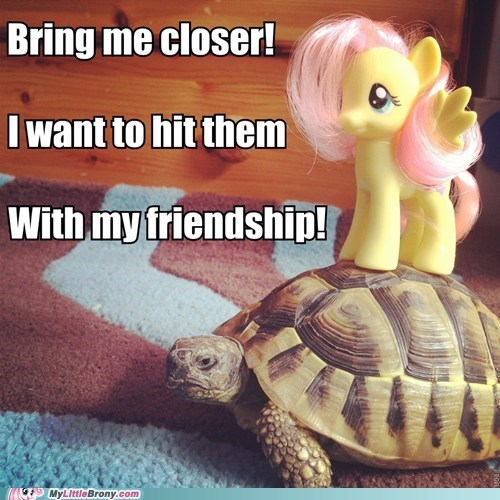 fluttershy IRL tank toy toys turtle - 6102543616