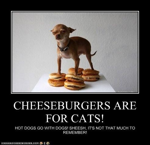 Cheezburger Image 6102617344