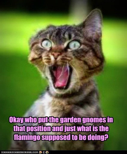 flamingo garden gnome grass lawn lolcat offended pastor positions prude sex - 6102921728