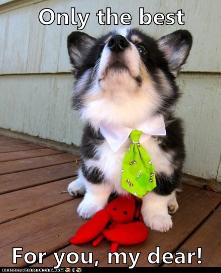 corgi,dogs,lobster,neck tie