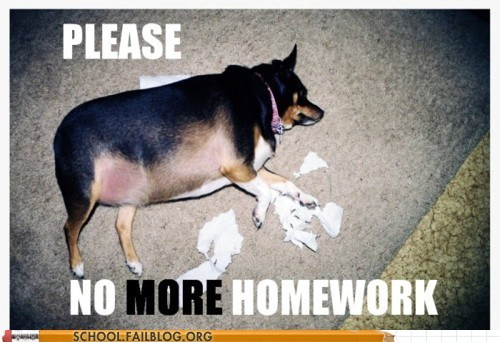 dog ate my homework,dogs,no more