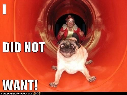best of the week,do not want,dogs,Hall of Fame,oh no,pug,pugs,scared,slide