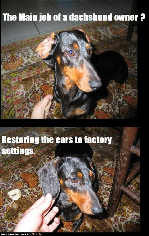 best of the week dachshund dogs ears factory settings Hall of Fame job multipanel owners