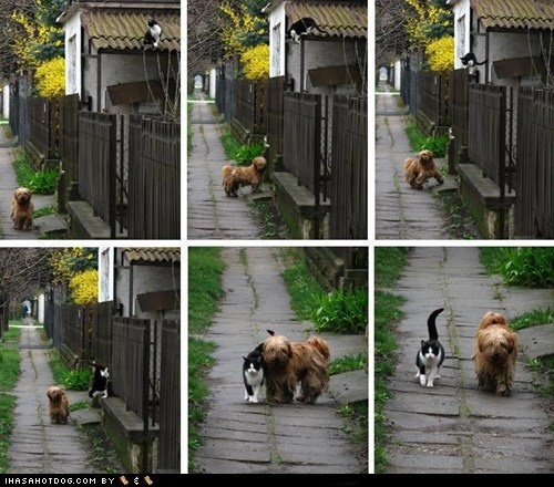 cat dogs kittehs r owr friends walk - 6103769088