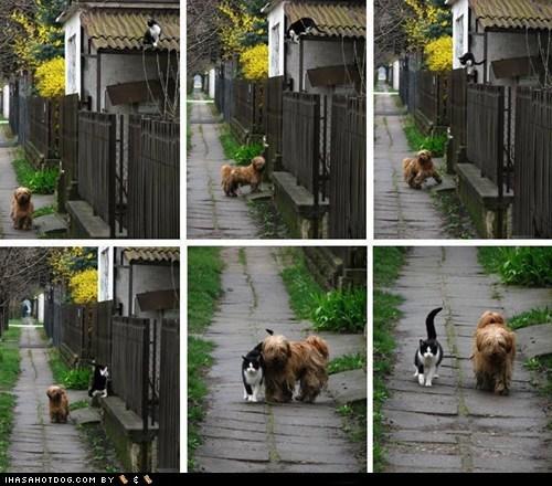 cat dogs kittehs r owr friends walk - 6103769088