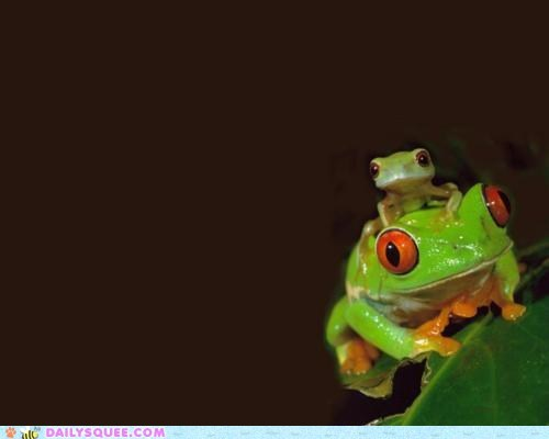 baby,frog,mom,moms,mothers day,squee,tree frog