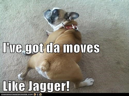 best of the week bulldog dance dogs Hall of Fame moves like jagger - 6104017664