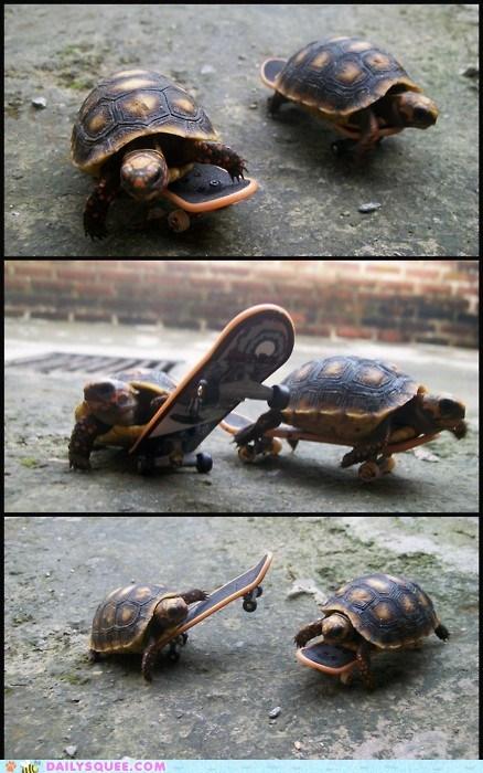 skateboarding tiny tricks turtles - 6104030464