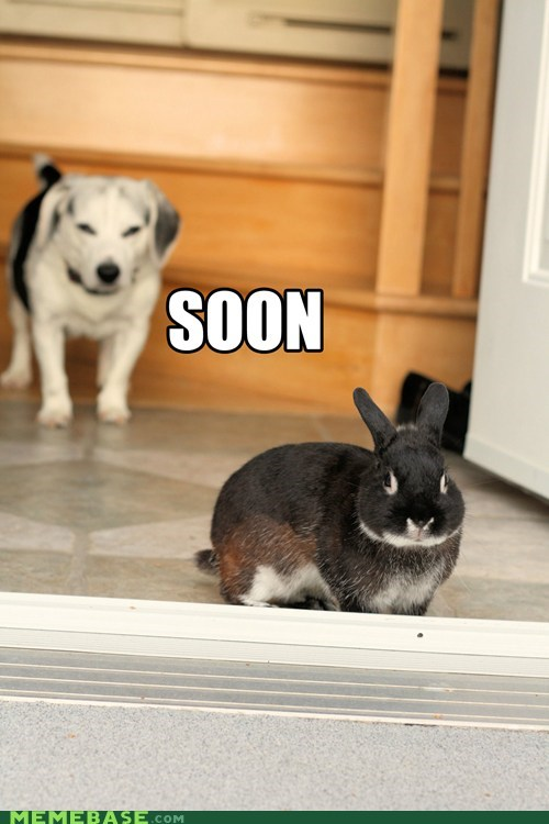 animals,bunny,dogs,SOON,stalk