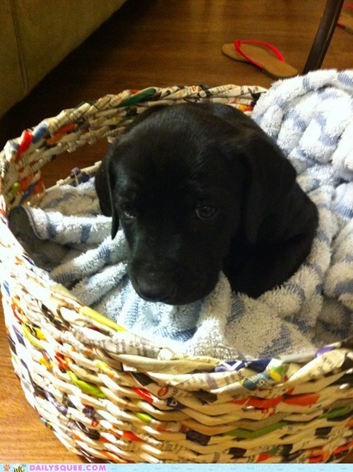 basket black dogs pets puppy reader squees towel