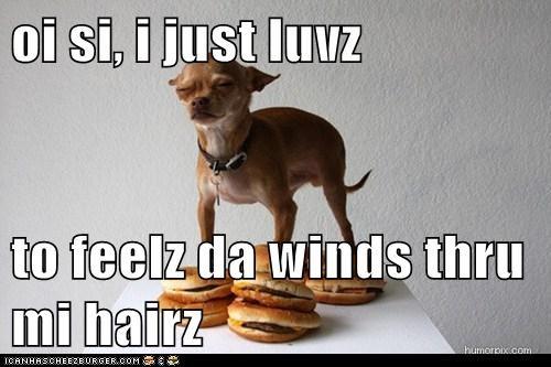 Cheezburger Image 6104504576