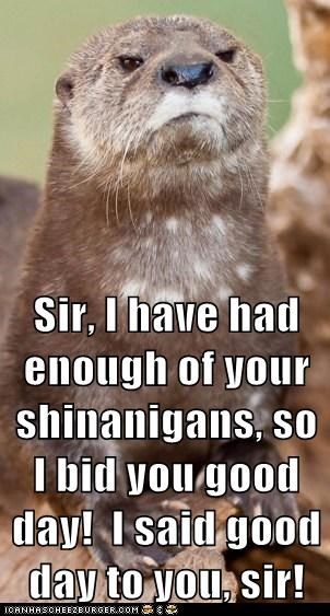 angry best of the week British fed up good day sir Hall of Fame indignant otter otters proper shenanigans
