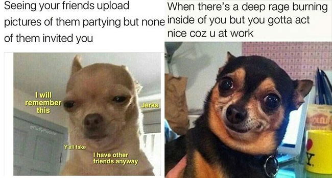 cute animals, dog memes, funny dogs | Dog - Seeing friends upload pictures them partying but none them invited will remember this Jerks eFluffyPloasso Yall fake have other friends anyway | Dog - there's deep rage burning inside but gotta act nice coz u at work