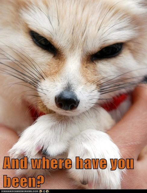angry ears fennec fox question where - 6105411584