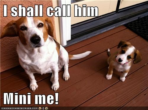 beagle,dogs,mini me,puppy